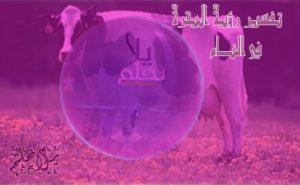 تفسير رؤية البقرة في المنام